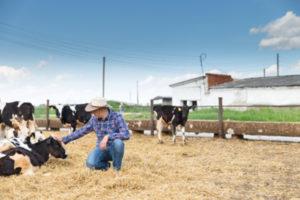 Cow Farmers in San Jose
